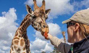 KID'S CHOICE: WILDLIFE ADVENTURES AROUND PHOENIX