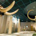 PHOENIX FAMILY: 8 KID-FRIENDLY MUSEUMS