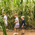 PUMPKIN PATCHES IN PHOENIX: VERTUCCIO FARMS
