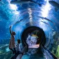 WHAT TO DO INDOORS IN PHOENIX: SEA LIFE AQUARIUM